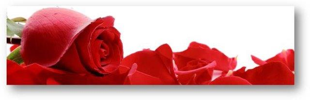 Legacy Images: Red Roses